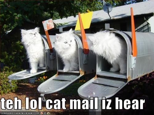 lolcat_mail